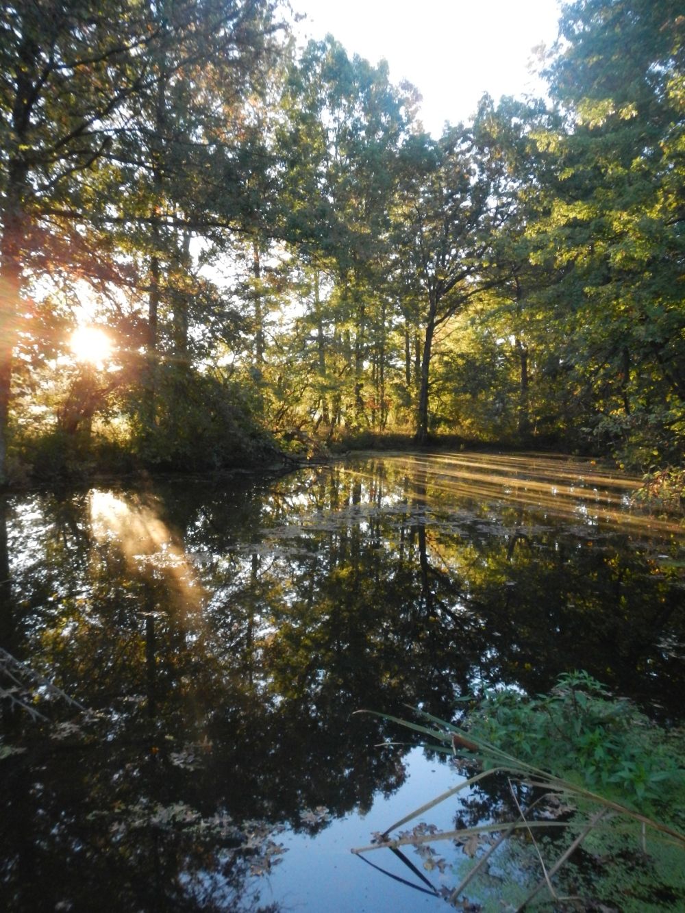 A pond at sunrise at Montgomery County Community College