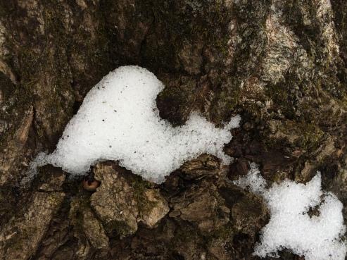 Amorphous Snow