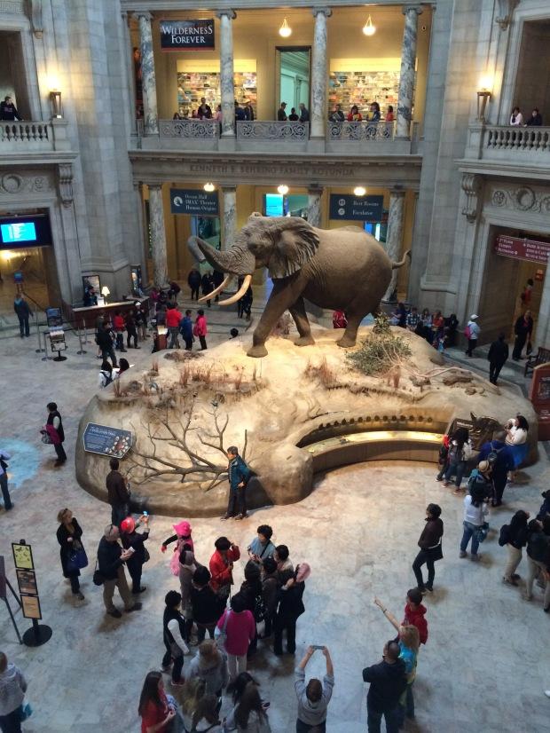 Washington D.C., Natural History Museum