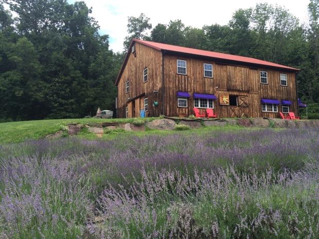 Peace Valley Lavender Farm